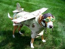 volando con mascotas Volando con mascotas